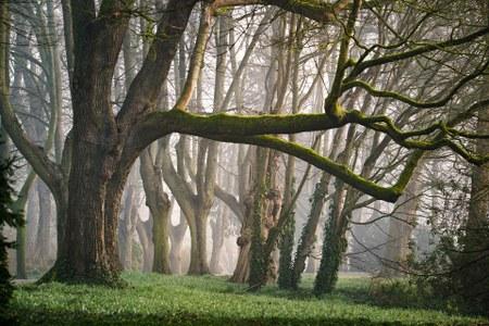 Bois communaux: battues de chasse