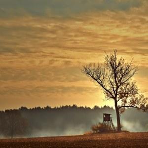 Droits de chasse bois communaux - Renouvellement
