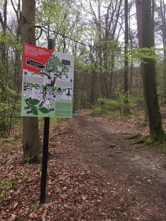 La balade du bois de Tihange et ses intrigues en forêt ouverte au public !