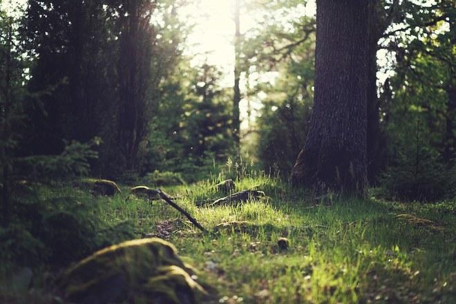 Les forêts de Huy obtiennent la certification PEFC