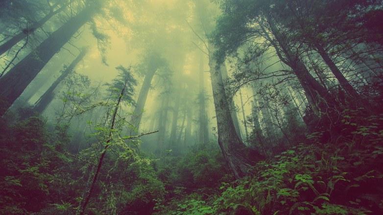 Prime à la plantation forestière
