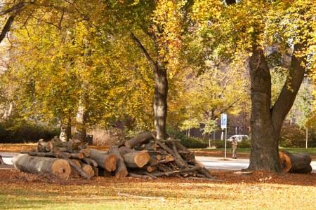 Vente de coupes de bois le 7 octobre